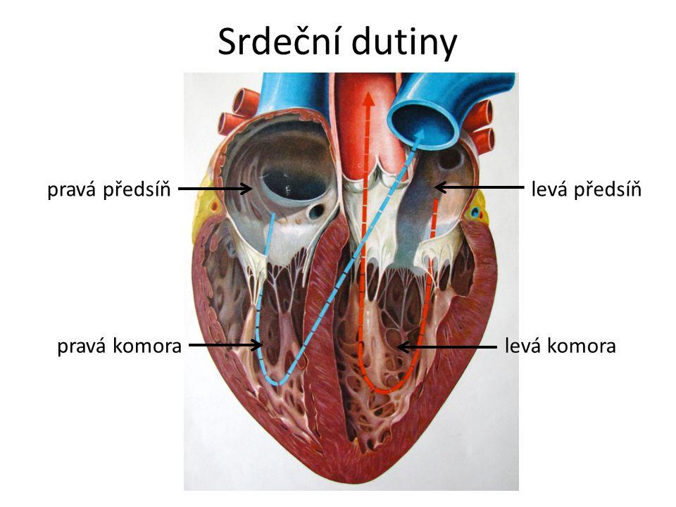 Srdeční chlopně aortální chlopeň pulmonální chlopeň trojcípá (trikuspidální) chlopeňdvojcípá (mitrální) chlopeň