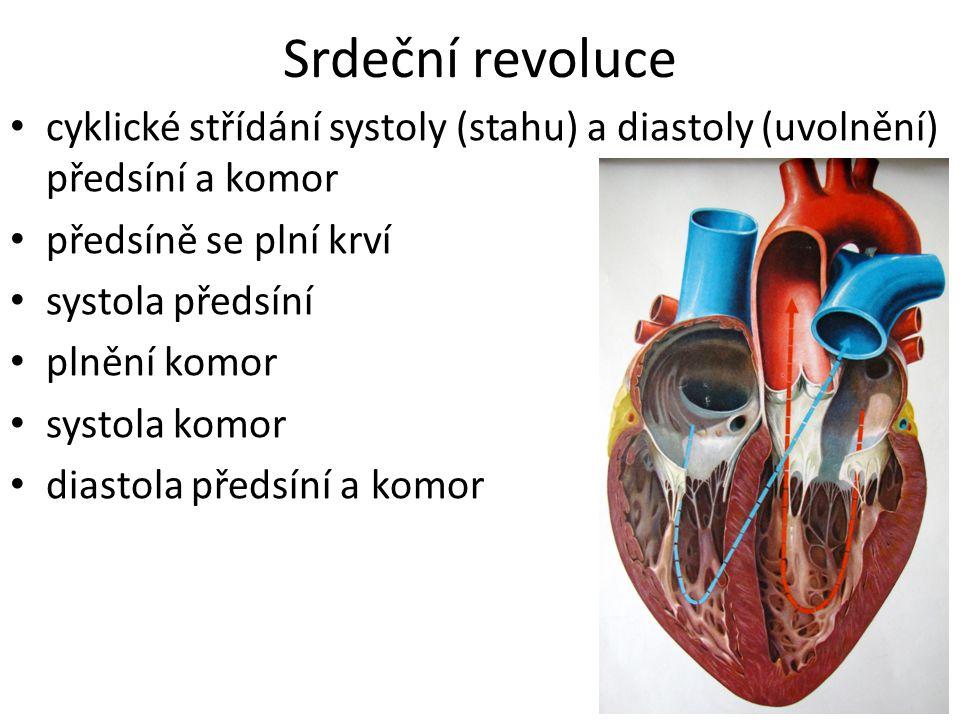 NERVOVÉ ŘÍZENÍ autonomní nervy: sympatikus ↑, parasympatikus ↓ LÁTKOVÉ ŘÍZENÍ hormony: adrenalin ↑ PŘEVODNÍ SYSTÉM SRDEČNÍ systém specializovaných buněk myokardu mající schopnost autonomně vytvářet vzruchy a tyto vzruchy následně rozvádět po celém srdci → srdeční automacie Řízení srdeční činnosti