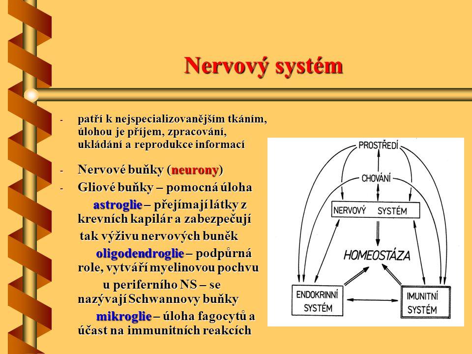 Nervový systém - patří k nejspecializovanějším tkáním, úlohou je příjem, zpracování, ukládání a reprodukce informací - Nervové buňky (neurony) - Gliov