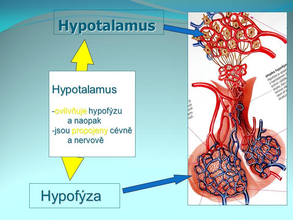 Hypotalamus Hypotalamus Hypofýza Hypofýza Hypotalamus -ovlivňuje hypofýzu a naopak a naopak -jsou propojeny cévně a nervově a nervově