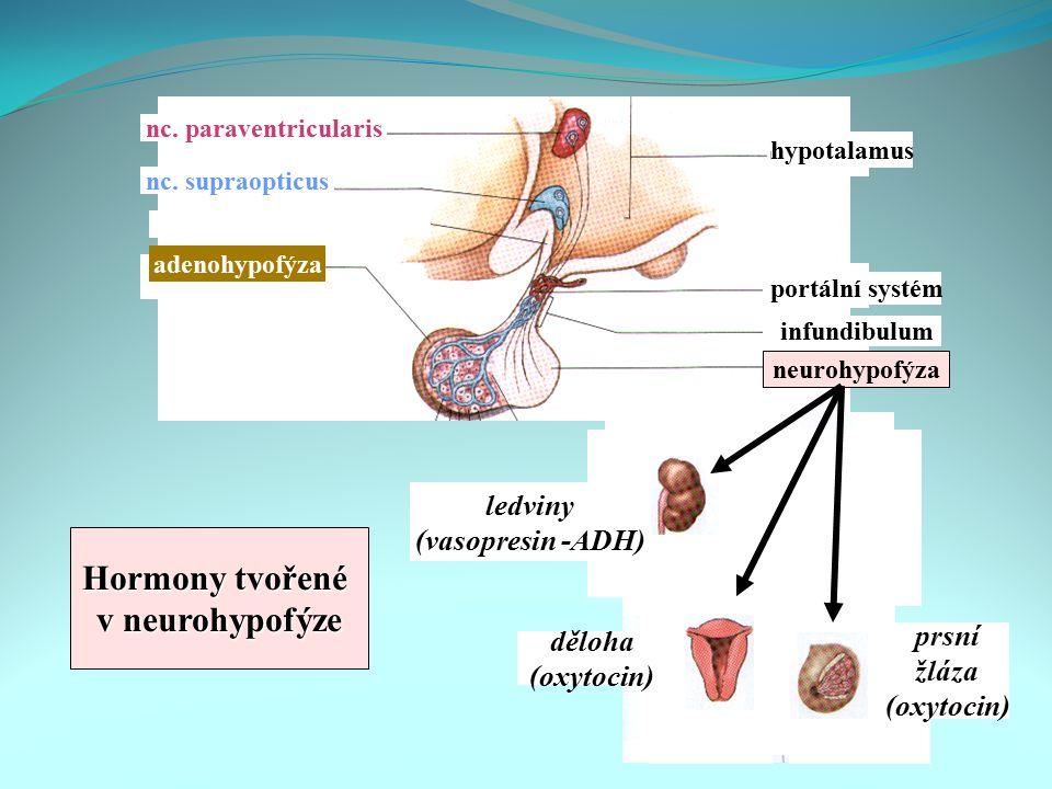 portální systém infundibulum neurohypofýza hypotalamus nc. paraventricularis nc. supraopticus adenohypofýza ledviny (vasopresin -ADH) děloha (oxytocin
