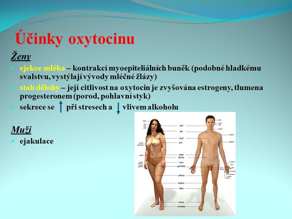 Účinky oxytocinu Ženy  ejekce mléka – kontrakcí myoepiteliálních buněk (podobné hladkému svalstvu, vystýlají vývody mléčné žlázy)  stah dělohy – jej