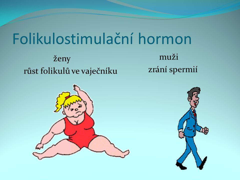 Folikulostimulační hormon ženy růst folikulů ve vaječníku muži zrání spermií
