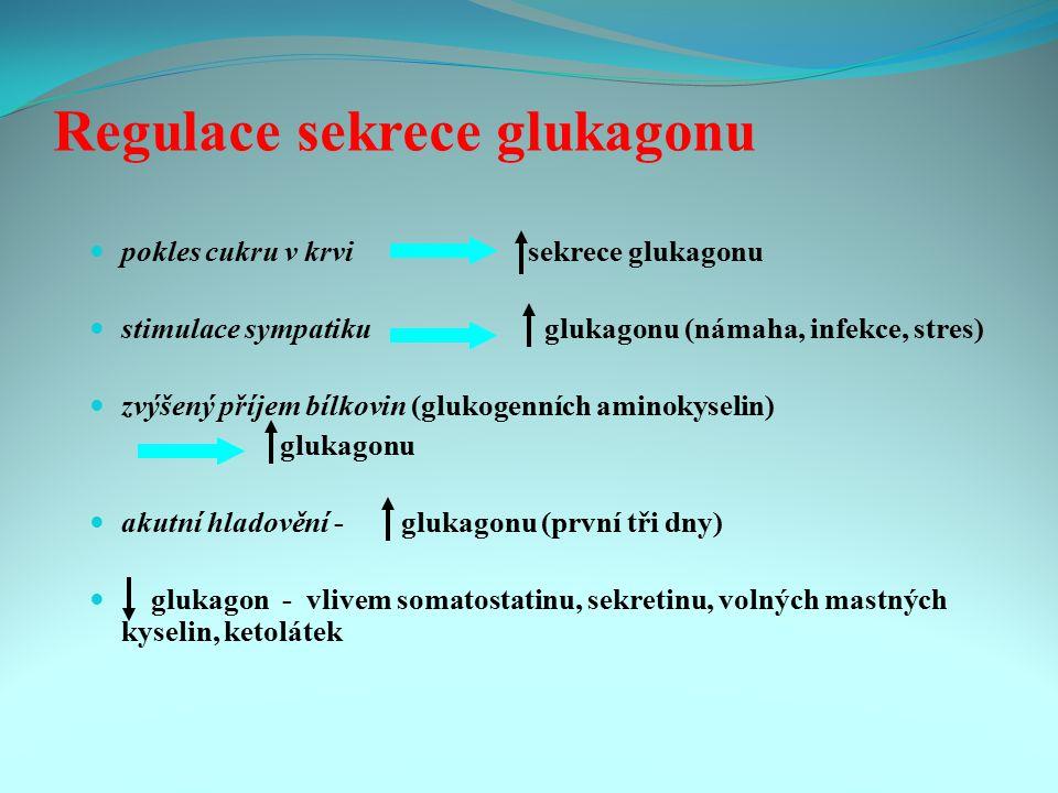 Regulace sekrece glukagonu pokles cukru v krvi sekrece glukagonu stimulace sympatiku glukagonu (námaha, infekce, stres) zvýšený příjem bílkovin (gluko