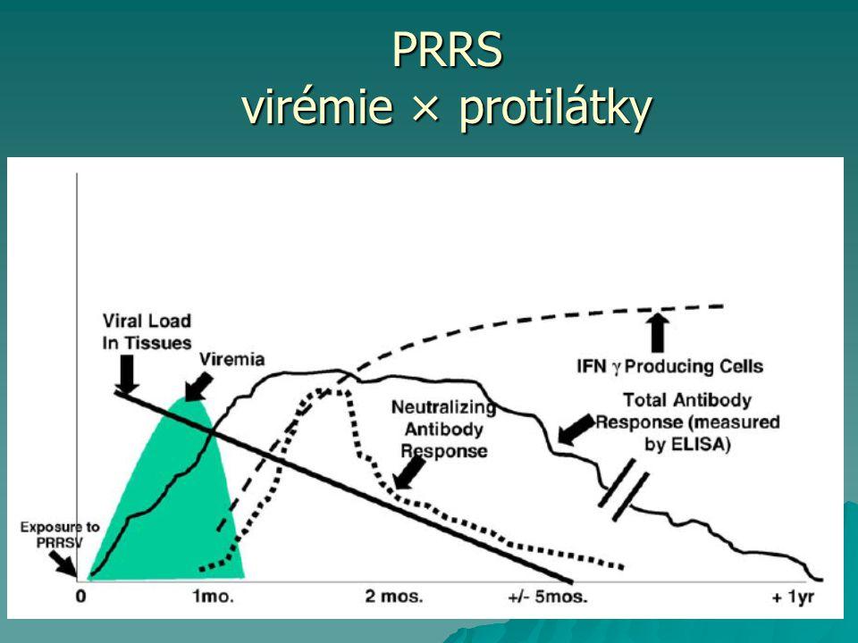 Změny  Periokulární edém, konjunktivitis, modré zabarvení uší, rypáku, vulvy  Intersticiální pneumonie, ztráta řasinkového epitelu, degradace epiteliálních buněk PRRS