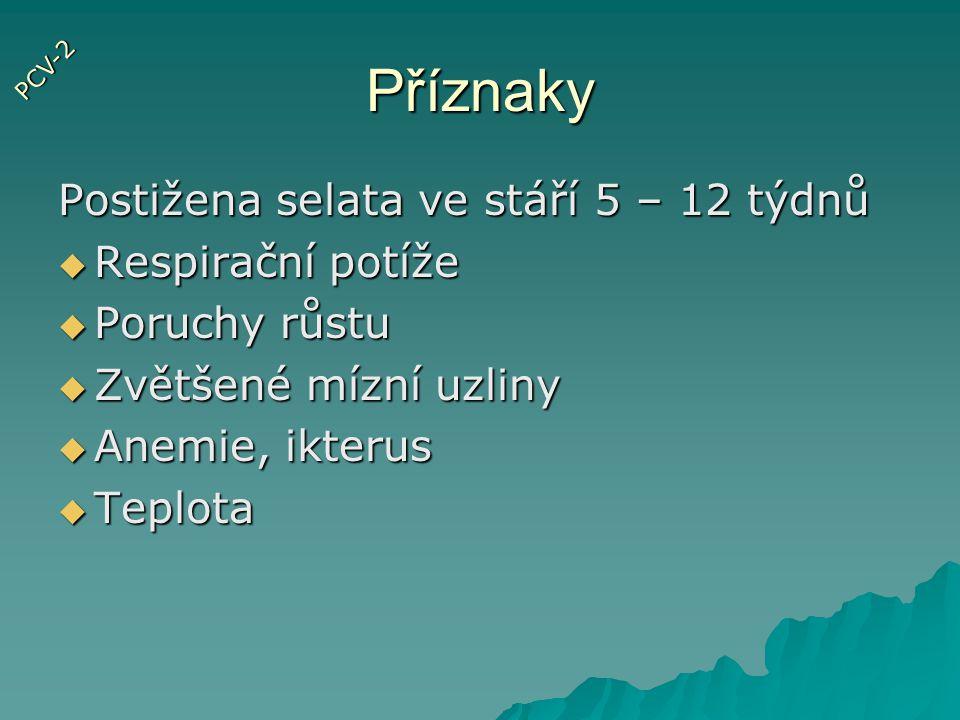 Trávící ústrojí II.