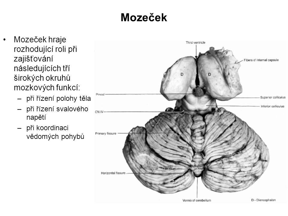 Mozeček Mozeček hraje rozhodující roli při zajišťování následujících tří širokých okruhů mozkových funkcí: –při řízení polohy těla –při řízení svalové
