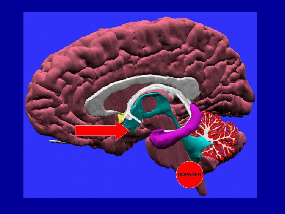 Stres Stres je kaskáda objektivních i subjektivních změn, které člověk vnímá jako ohrožení své tělesné nebo duševní pohody Stresor je událost, na kterou reagujeme stresovou reakcí Stresová reakce: 1) rychlá: noradrenalin, dopamin, serotonin a hormon uvolňující kortikortropin: bdělost, vyhodnocení situace, volba strategie 2) pomalejší, adaptivní odpověď: změny genové exprese
