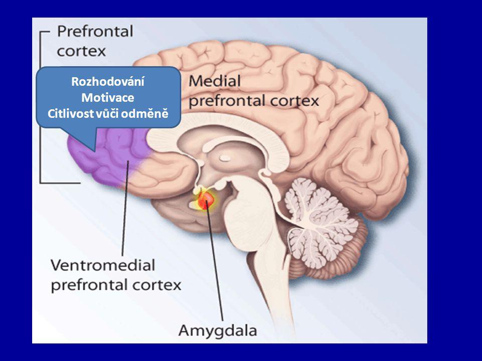 Negativní emoce a nemoc Úzkost, zlost a deprese predisponují jejich nositele k chronickým nemocem a zhoršují prognózu.