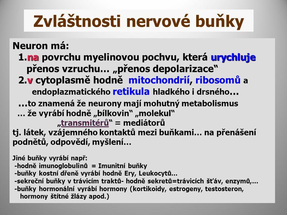 """Zvláštnosti nervové buňky Neuron má: naurychluje 1.na povrchu myelinovou pochvu, která urychluje přenos vzruchu… """"přenos depolarizace v 2.v cytoplasmě hodně mitochondrií, ribosomů a endoplazmatického retikula hladkého i drsného … … to znamená že neurony mají mohutný metabolismus … že vyrábí hodně """"bílkovin """"molekul """"transmitérů = mediátorů tj."""