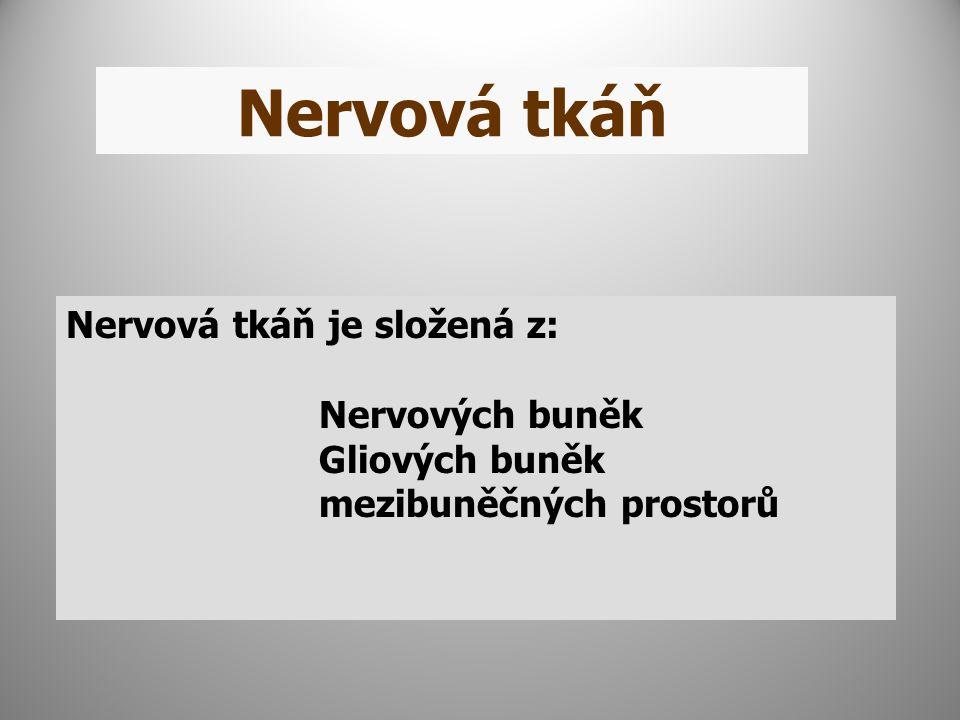 Nervová tkáň Nervová tkáň je složená z: Nervových buněk Gliových buněk mezibuněčných prostorů