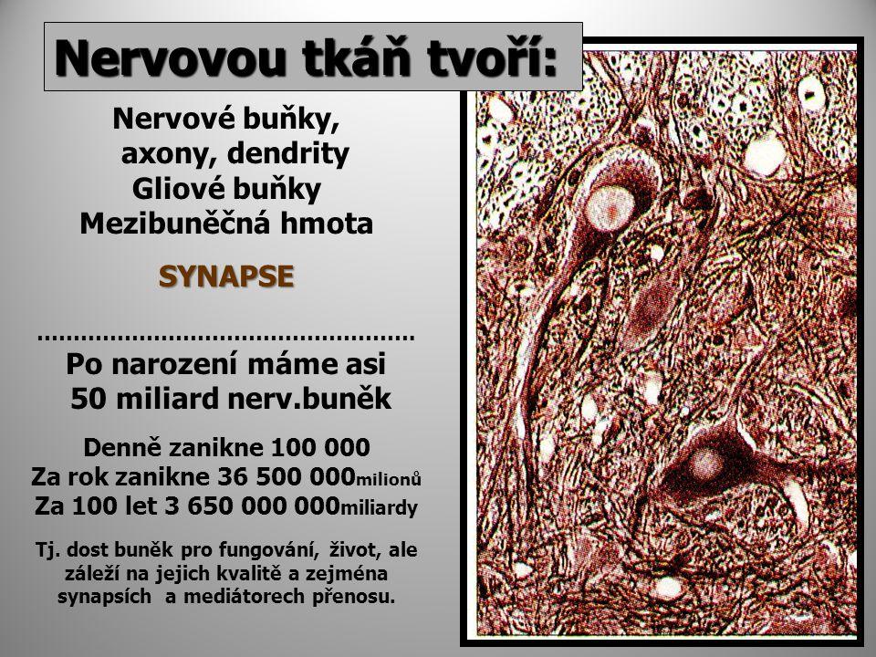 Nervovou tkáň tvoří: Nervové buňky, axony, dendrity Gliové buňky Mezibuněčná hmotaSYNAPSE …………………………………………….