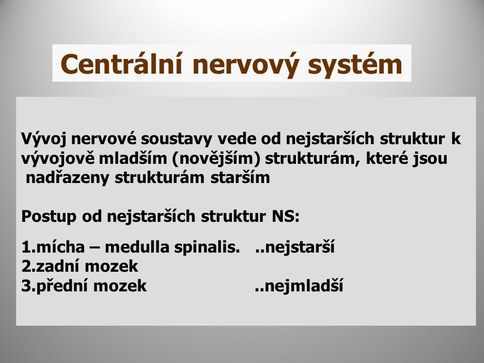 Centrální nervový systém Vývoj nervové soustavy vede od nejstarších struktur k vývojově mladším (novějším) strukturám, které jsou nadřazeny strukturám starším Postup od nejstarších struktur NS: 1.mícha – medulla spinalis...nejstarší 2.zadní mozek 3.přední mozek..nejmladší