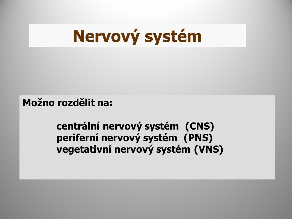Nervový systém Možno rozdělit na: centrální nervový systém (CNS) periferní nervový systém (PNS) vegetativní nervový systém (VNS)