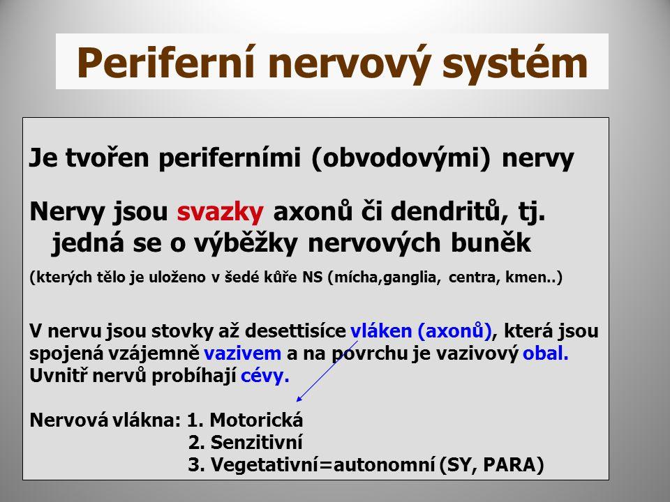 Je tvořen periferními (obvodovými) nervy Nervy jsou svazky axonů či dendritů, tj. jedná se o výběžky nervových buněk (kterých tělo je uloženo v šedé k