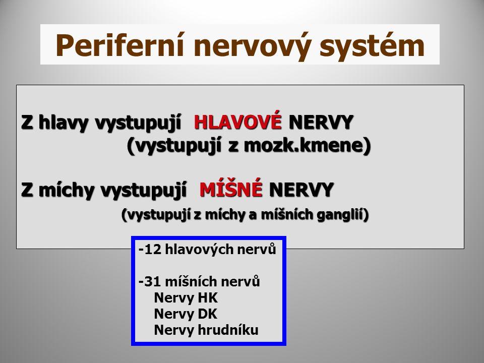 Periferní nervový systém Z hlavy vystupují HLAVOVÉ NERVY (vystupují z mozk.kmene) (vystupují z mozk.kmene) Z míchy vystupují MÍŠNÉ NERVY (vystupují z míchy a míšních ganglií) (vystupují z míchy a míšních ganglií) -12 hlavových nervů -31 míšních nervů Nervy HK Nervy DK Nervy hrudníku