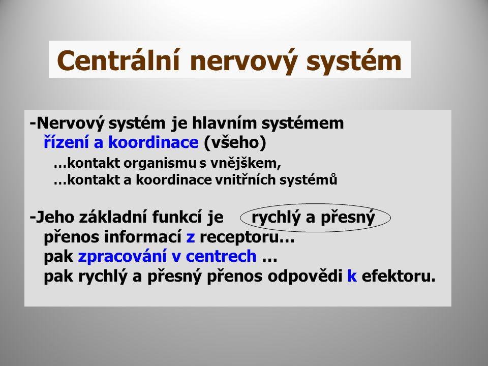 Centrální nervový systém -Nervový systém je hlavním systémem řízení a koordinace (všeho) …kontakt organismu s vnějškem, …kontakt a koordinace vnitřních systémů -Jeho základní funkcí je rychlý a přesný přenos informací z receptoru… pak zpracování v centrech … pak rychlý a přesný přenos odpovědi k efektoru.