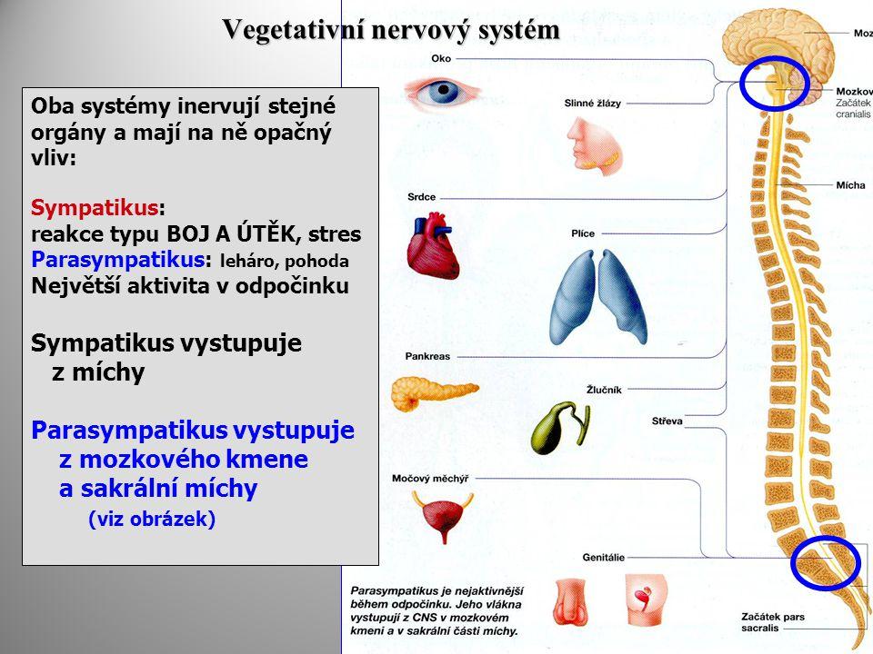Vegetativní nervový systém Oba systémy inervují stejné orgány a mají na ně opačný vliv: Sympatikus: reakce typu BOJ A ÚTĚK, stres Parasympatikus: leháro, pohoda Největší aktivita v odpočinku Sympatikus vystupuje z míchy Parasympatikus vystupuje z mozkového kmene a sakrální míchy (viz obrázek)