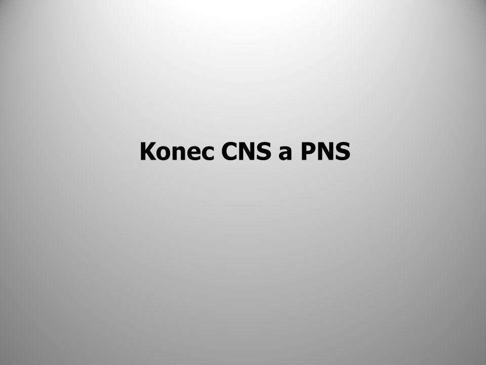 Konec CNS a PNS