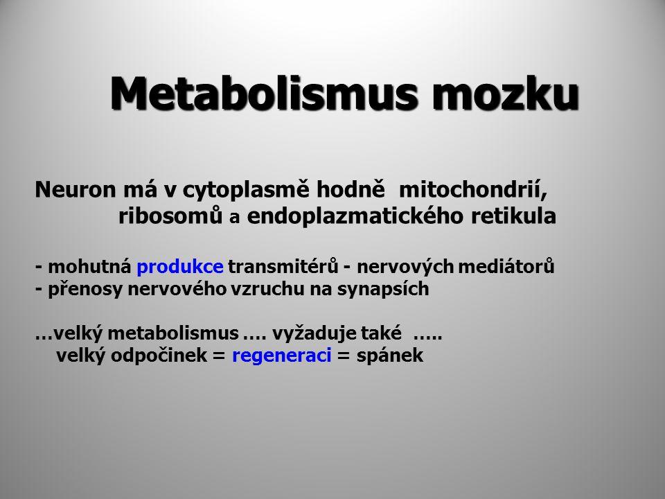 Metabolismus mozku Metabolismus mozku Neuron má v cytoplasmě hodně mitochondrií, ribosomů a endoplazmatického retikula - mohutná produkce transmitérů - nervových mediátorů - přenosy nervového vzruchu na synapsích …velký metabolismus ….