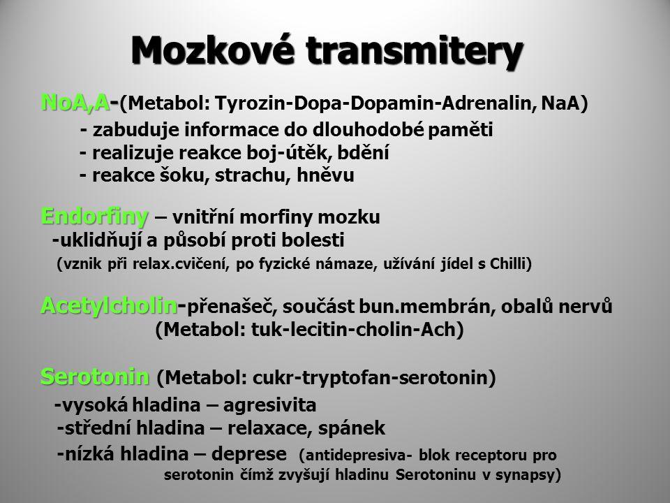 Mozkové transmitery NoA,A- NoA,A- (Metabol: Tyrozin-Dopa-Dopamin-Adrenalin, NaA) - zabuduje informace do dlouhodobé paměti - realizuje reakce boj-útěk