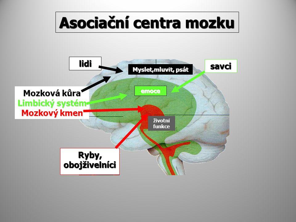 Asociační centra mozku Ryby, obojživelníci Mozková kůra Limbický systém Mozkový kmen savci lidi Myslet,mluvit, psát emoce životní funkce
