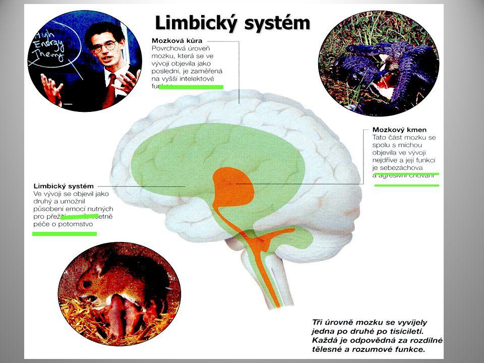 Limbický systém