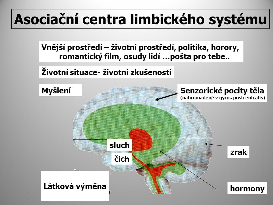 Asociační centra limbického systému Životní situace- životní zkušenosti čich MyšleníSenzorické pocity těla (nahromaděné v gyrus postcentralis) sluch zrak Vnější prostředí – životní prostředí, politika, horory, romantický film, osudy lidí …pošta pro tebe..