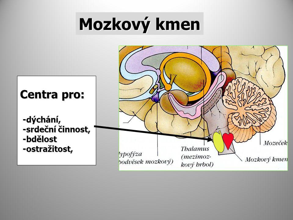 Mozkový kmen Centra pro: -dýchání, -dýchání, -srdeční činnost, -srdeční činnost, -bdělost -bdělost -ostražitost, -ostražitost,