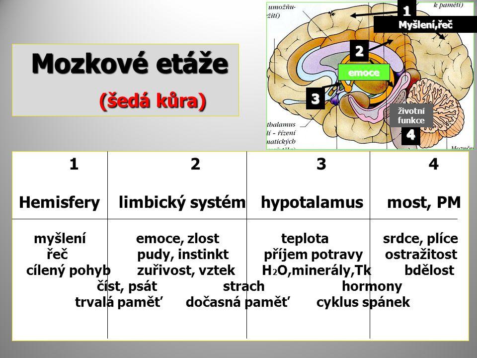 Mozkové etáže Mozkové etáže (šedá kůra) (šedá kůra) 1 2 3 4 Hemisfery limbický systém hypotalamus most, PM myšlení emoce, zlost teplota srdce, plíce řeč pudy, instinkt příjem potravy ostražitost cílený pohyb zuřivost, vztek H 2 O,minerály,Tk bdělost číst, psát strach hormony trvalá paměť dočasná paměť cyklus spánek 1 2 3 4 Myšlení,řeč emoce životní funkce