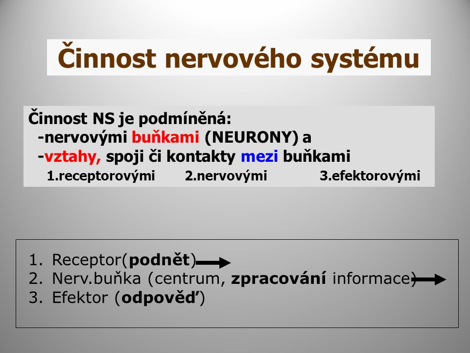 Činnost nervového systému Činnost NS je podmíněná: -nervovými buňkami (NEURONY) a -vztahy, spoji či kontakty mezi buňkami 1.receptorovými 2.nervovými 3.efektorovými 1.Receptor(podnět) 2.Nerv.buňka (centrum, zpracování informace) 3.Efektor (odpověď)