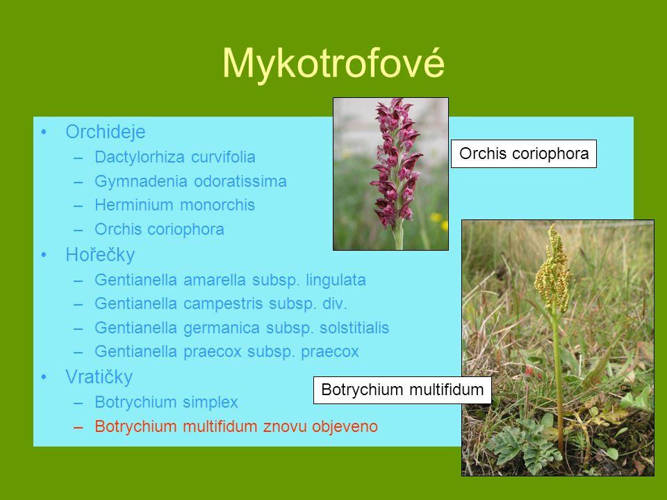 Mykotrofové Orchideje –Dactylorhiza curvifolia –Gymnadenia odoratissima –Herminium monorchis –Orchis coriophora Hořečky –Gentianella amarella subsp. l