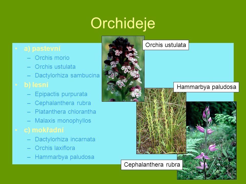 Orchideje a) pastevní –Orchis morio –Orchis ustulata –Dactylorhiza sambucina b) lesní –Epipactis purpurata –Cephalanthera rubra –Platanthera chloranth