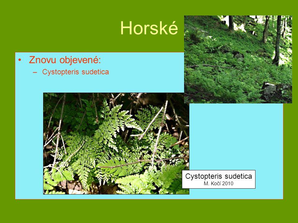 Horské Znovu objevené: –Cystopteris sudetica Cystopteris sudetica M. Kočí 2010