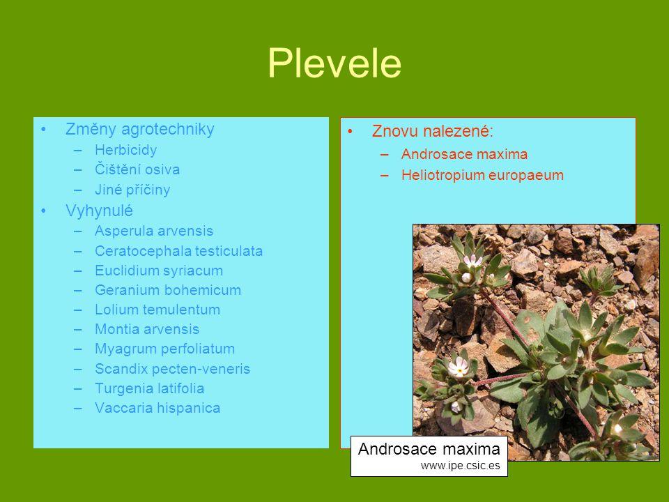 Plevele Změny agrotechniky –Herbicidy –Čištění osiva –Jiné příčiny Vyhynulé –Asperula arvensis –Ceratocephala testiculata –Euclidium syriacum –Geraniu