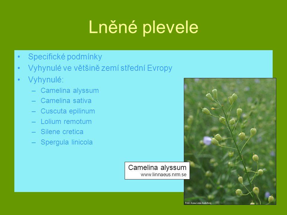 Lněné plevele Specifické podmínky Vyhynulé ve většině zemí střední Evropy Vyhynulé: –Camelina alyssum –Camelina sativa –Cuscuta epilinum –Lolium remot