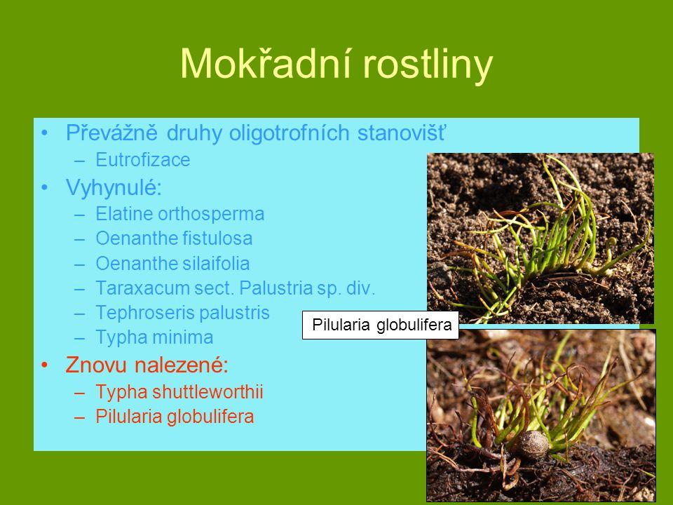 Mokřadní rostliny Převážně druhy oligotrofních stanovišť –Eutrofizace Vyhynulé: –Elatine orthosperma –Oenanthe fistulosa –Oenanthe silaifolia –Taraxac