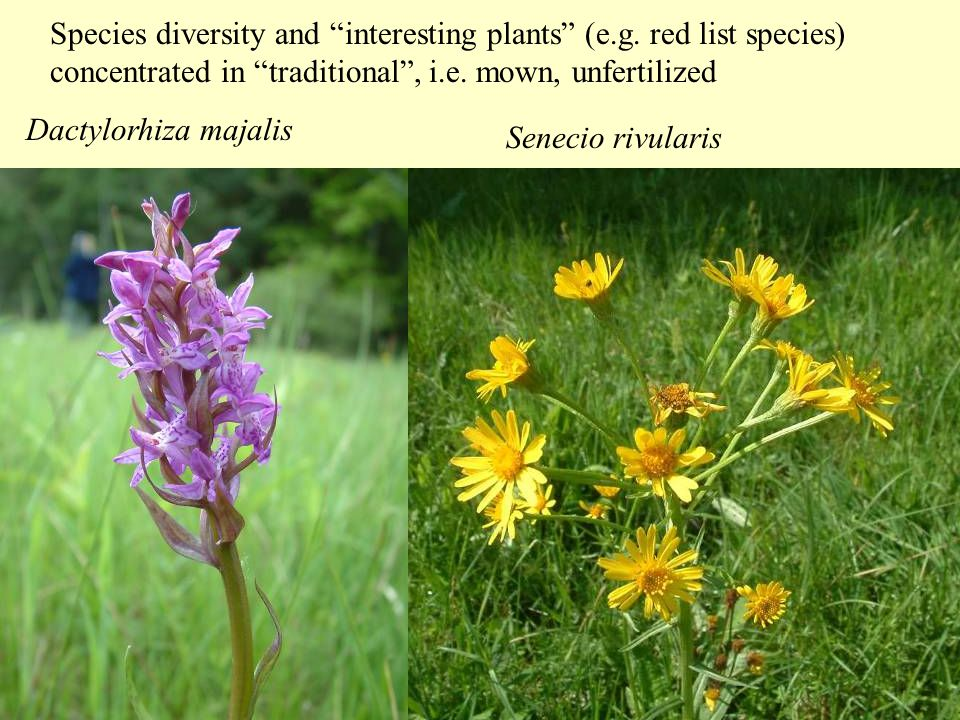 Species diversity and interesting plants (e.g.