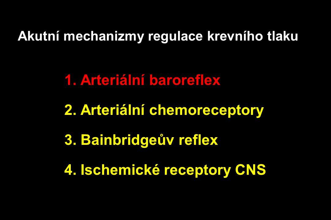 Akutní mechanizmy regulace krevního tlaku 1. Arteriální baroreflex 2. Arteriální chemoreceptory 3. Bainbridgeův reflex 4. Ischemické receptory CNS