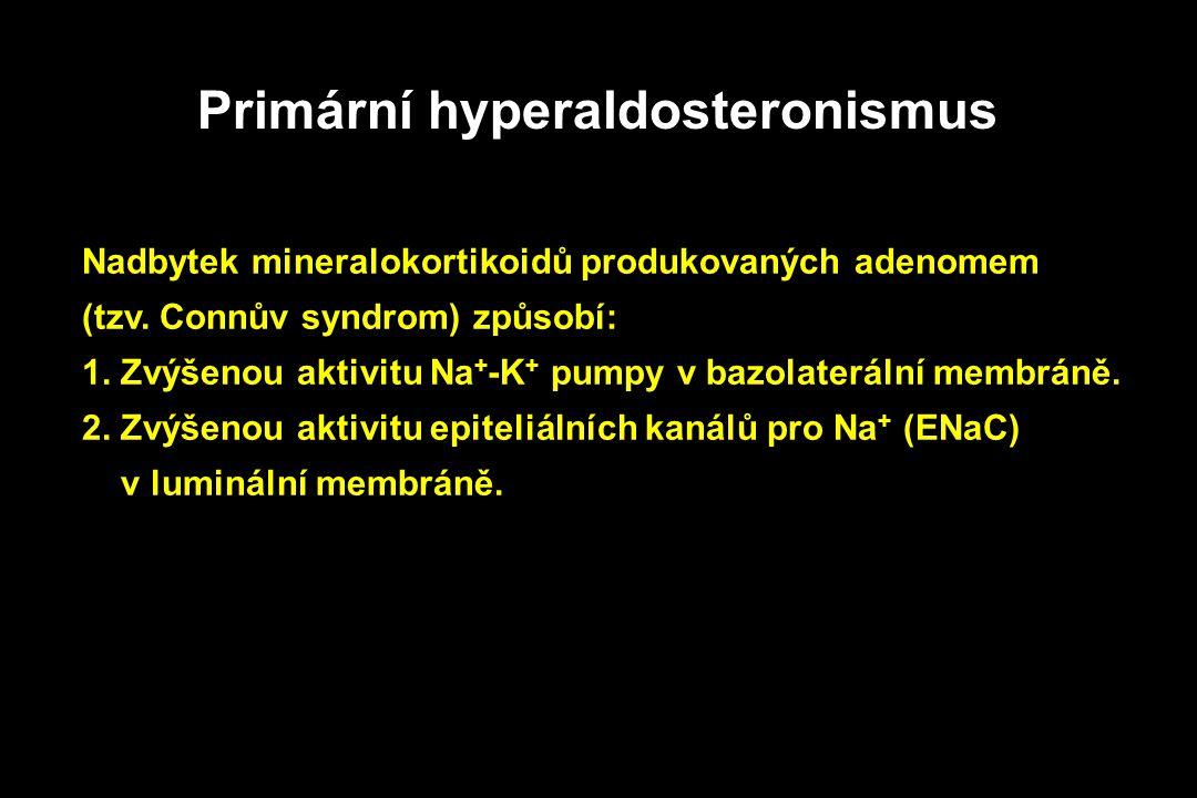 Primární hyperaldosteronismus Nadbytek mineralokortikoidů produkovaných adenomem (tzv. Connův syndrom) způsobí: 1. Zvýšenou aktivitu Na + -K + pumpy v