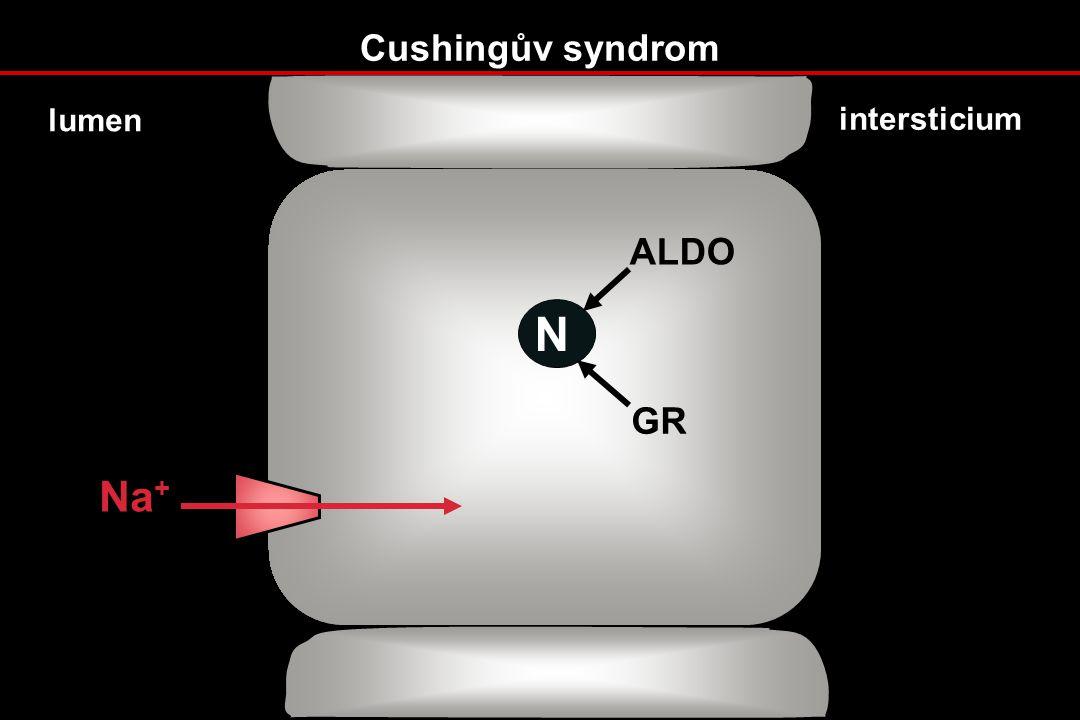 Cushingův syndrom N ALDO GR Na + lumen intersticium