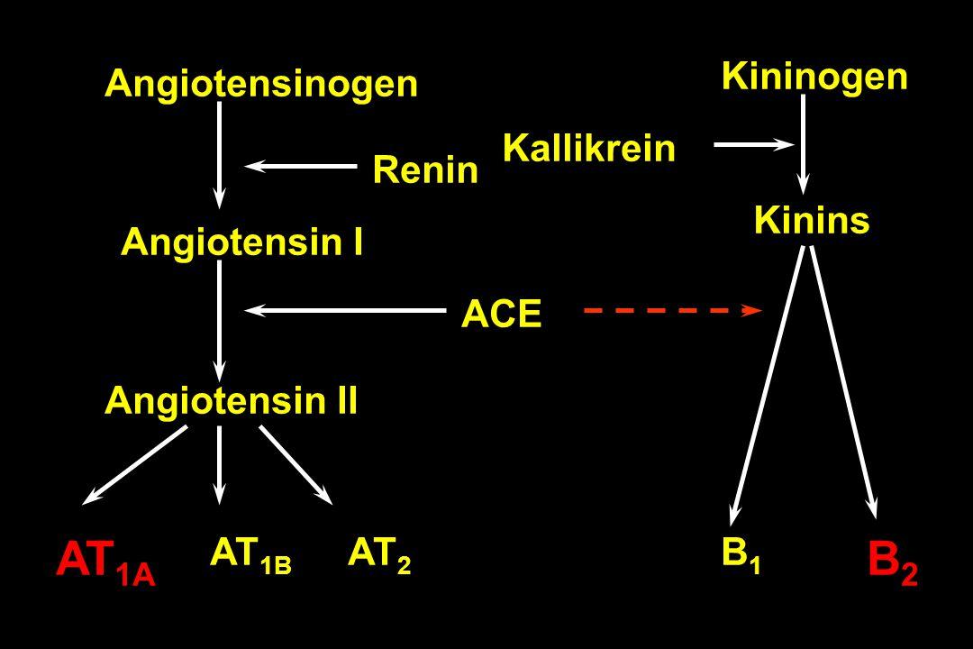 Angiotensinogen Angiotensin I Angiotensin II Kininogen Kinins Kallikrein ACE Renin AT 1A AT 1B AT 2 B1B1 B2B2