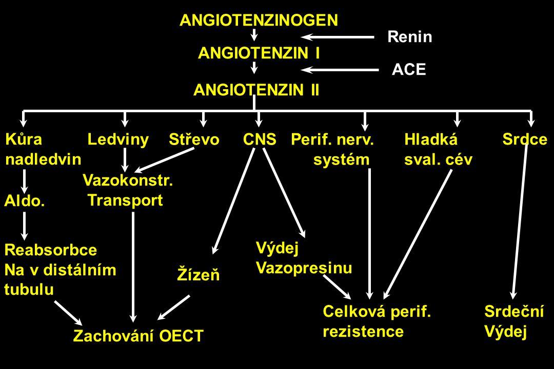 ANGIOTENZINOGEN ANGIOTENZIN I ANGIOTENZIN II Kůra nadledvin Ledviny StřevoCNSPerif. nerv. systém Hladká sval. cév Srdce Aldo. Vazokonstr. Transport Ží