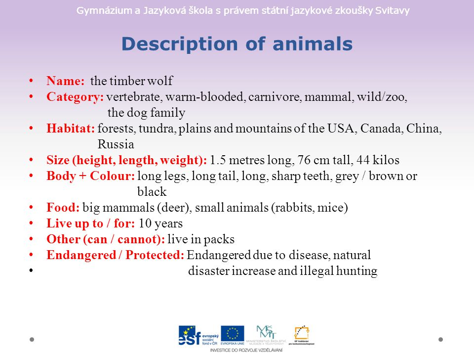 Gymnázium a Jazyková škola s právem státní jazykové zkoušky Svitavy Description of animals Name: the timber wolf Category: vertebrate, warm-blooded, carnivore, mammal, wild/zoo, the dog family Habitat: forests, tundra, plains and mountains of the USA, Canada, China, Russia Size (height, length, weight): 1.5 metres long, 76 cm tall, 44 kilos Body + Colour: long legs, long tail, long, sharp teeth, grey / brown or black Food: big mammals (deer), small animals (rabbits, mice) Live up to / for: 10 years Other (can / cannot): live in packs Endangered / Protected: Endangered due to disease, natural disaster increase and illegal hunting