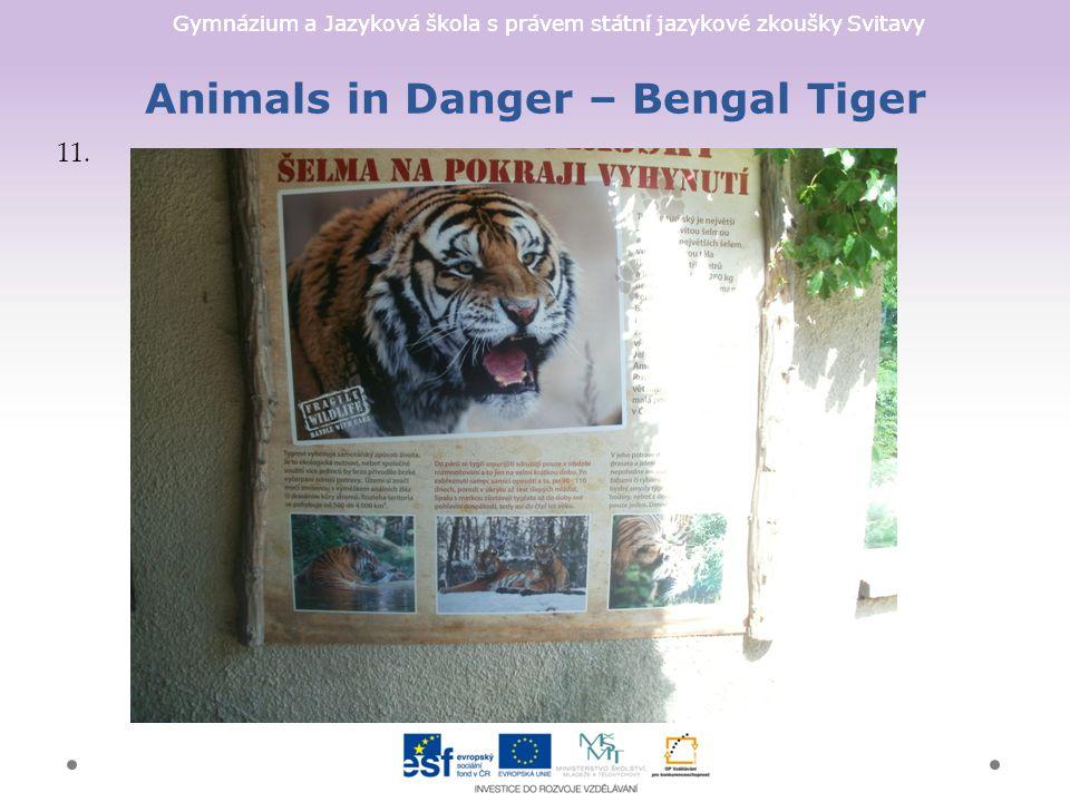 Gymnázium a Jazyková škola s právem státní jazykové zkoušky Svitavy Animals in Danger – Bengal Tiger 11.