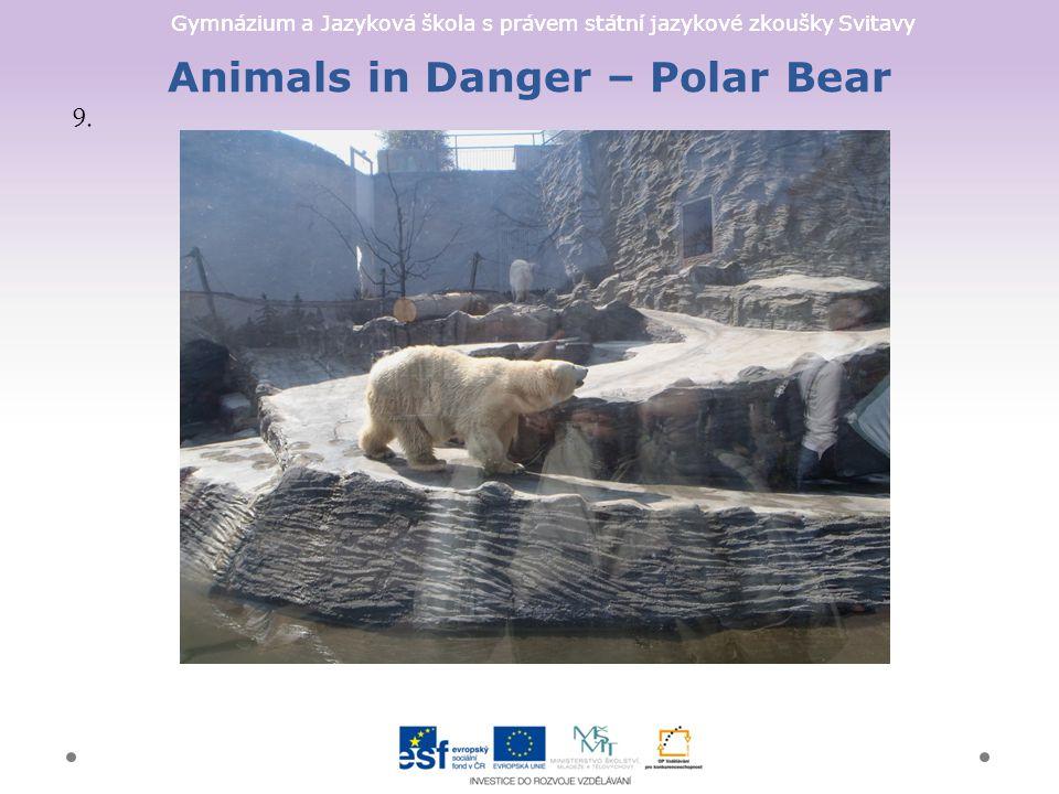 Gymnázium a Jazyková škola s právem státní jazykové zkoušky Svitavy Animals in Danger – Polar Bear 9.