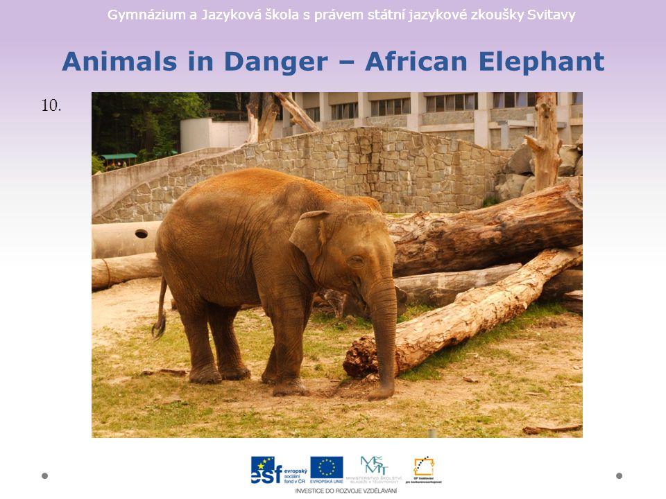 Gymnázium a Jazyková škola s právem státní jazykové zkoušky Svitavy Animals in Danger – African Elephant 10.