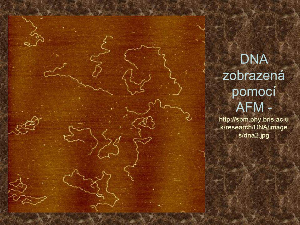 DNA zobrazená pomocí AFM - http://spm.phy.bris.ac.u k/research/DNA/image s/dna2.jpg