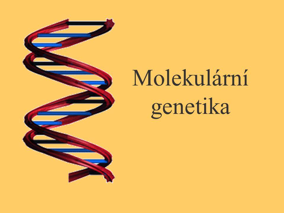 Rozdíly mezi DNA a RNA DNA deoxyribóza, báze thymin dvouvláknová 1 typ DNA u všech živých organismů stejná fce: uchovávání a přenos genetické informace RNA ribóza, místo báze thyminu uracil většinou jednovláknová 3 typy RNA – mRNA, tRNA, rRNA rozličné fce