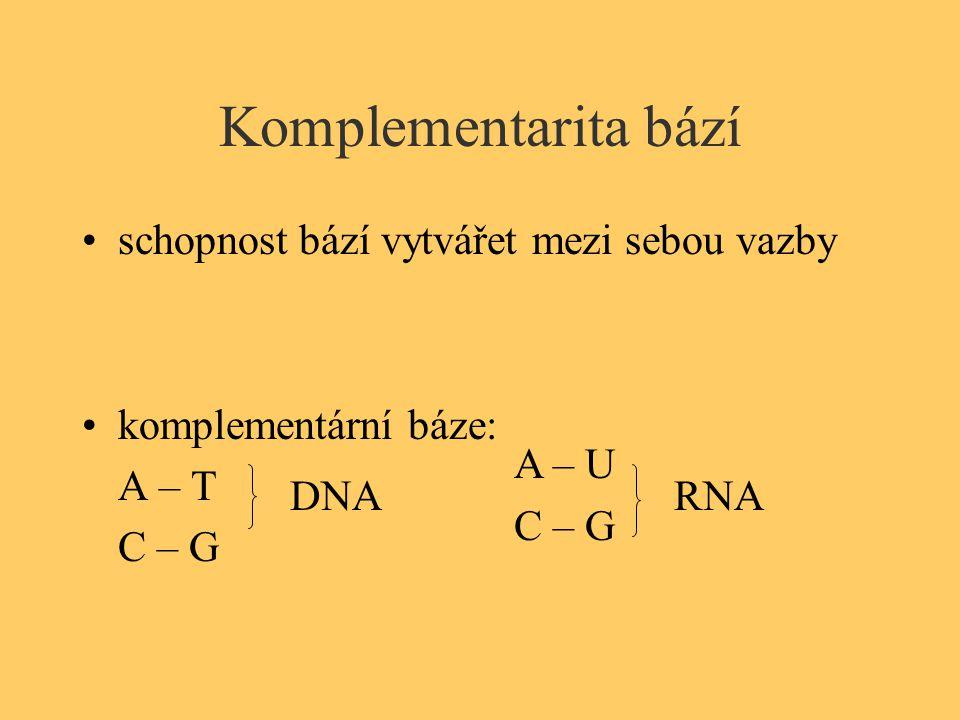 Komplementarita bází schopnost bází vytvářet mezi sebou vazby komplementární báze: A – T C – G DNA A – U C – G RNA